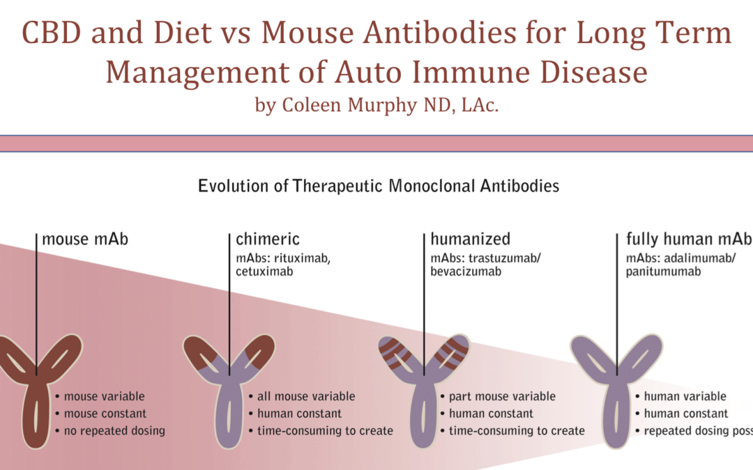 CBD and Diet vs Mouse Antibodies for Long Term Management of Auto Immune Disease